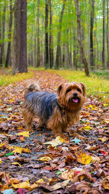 كلاب,كلب,خلفيات,عالم الكلاب,تدريب كلاب,تدريب الكلاب,اقوى الكلاب,اشرس الكلاب,الكويت,اضخم كلاب العالم,كلاب شرسة,اجمد كلاب فى العالم,كلاب جيرمن,خلفيات بنات,خلفيات هاتف,خلفيات هكر,أشرس الكلاب في العالم,اقوى كلاب في العالم,خلفيات جميلة,كلاب الحراسة