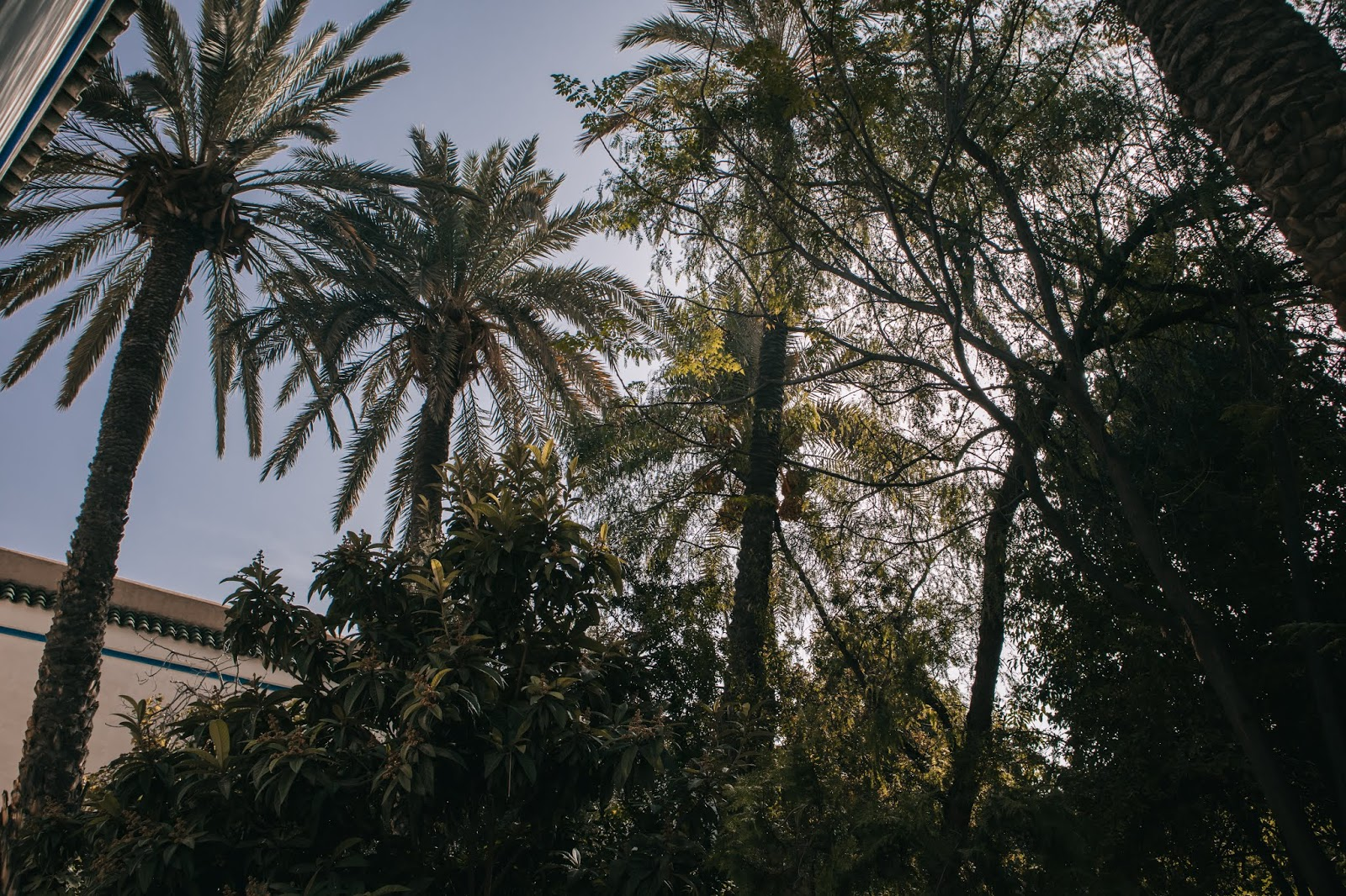 impressions of Marrakesh, Marrakech November 2018, Marrakesh November, Marrakesh travel, Suz and the Sun Travels, Suz & the Sun, Le Jardin Secret