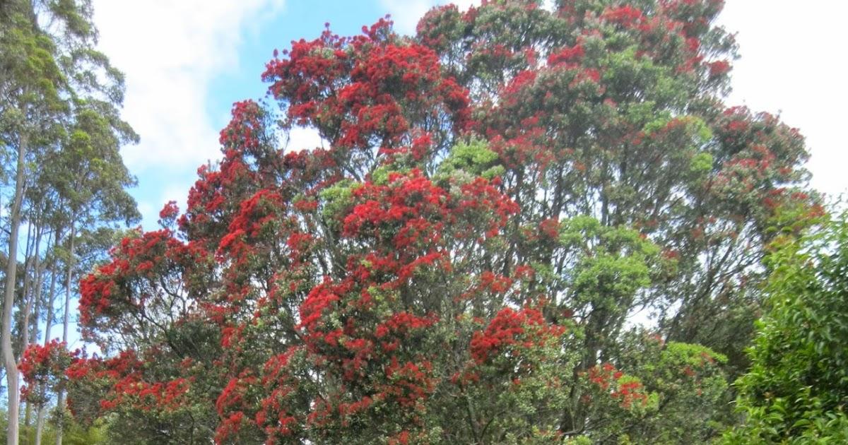 Quiltingorchardist: New Zealand Christmas Tree
