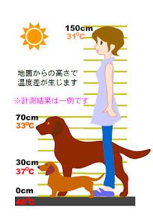 temperatura do piso para cães no verão