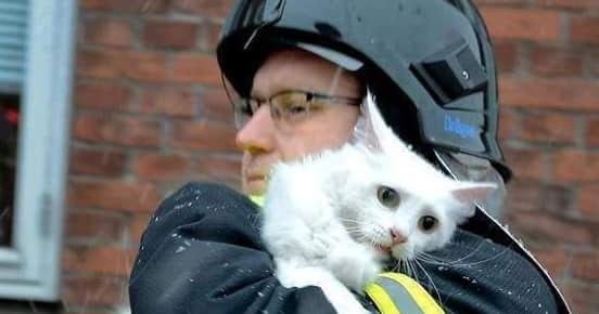 Gatinho é salvo de um prédio em chamas - Revista Nós e outros Olhos