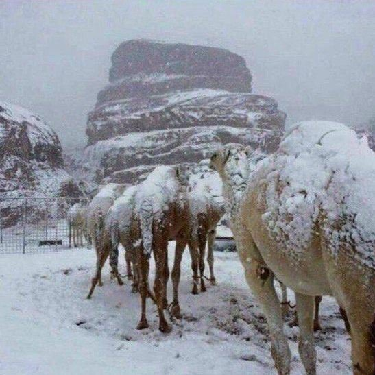 snow hits Saudi Arabia