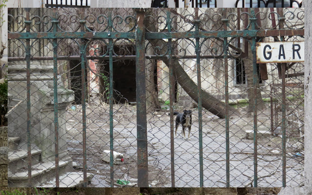 Dog behind a fence in Bucharest, Romania