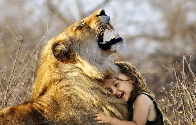 Cara Bertahan dari Serangan Singa
