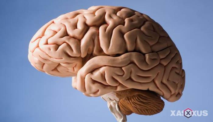 Fakta 7 - Sel-sel syaraf dalam otak janin 8 minggu mulai aktif