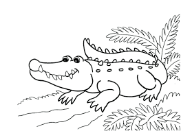 Aligator Coloring Pages On River