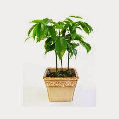 Science with Ms Saltiel Plants