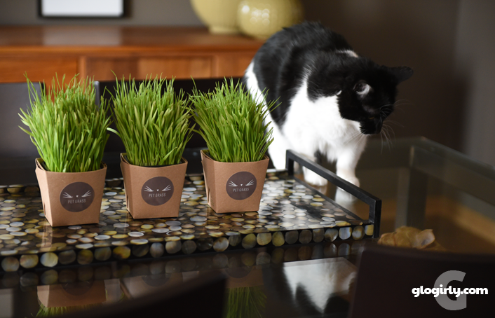 Pretty display of Whisker Greens pet grass on table with Katie