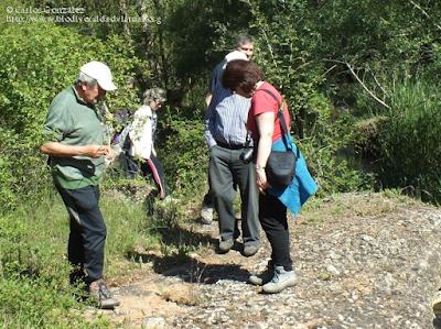 http://www.biodiversidadvirtual.org/insectarium/III-Testing-de-Biodiversidad-Punto-BV-Espacio-Pirineos-img793853.html