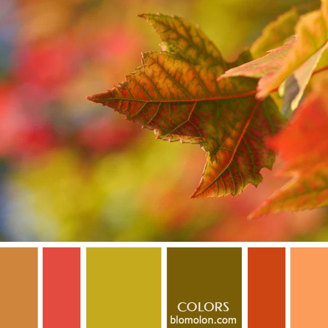 variedad_en_color_paletas_de_colores_26