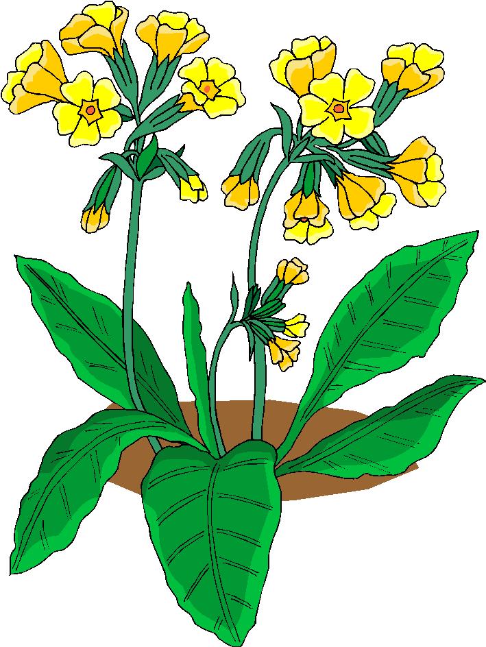 clip art flowers microsoft - photo #29