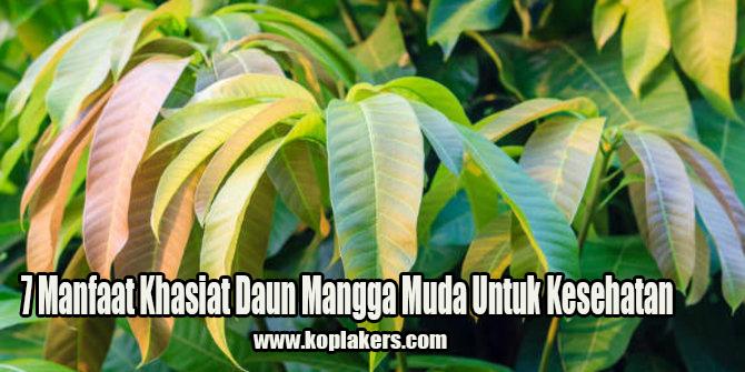Manfaat dan Khasiat daun buah mangga untuk kesehatan dan pengobatan