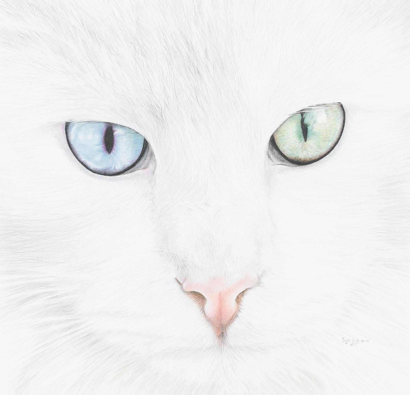 Кошачьи глаза картинки рисунок