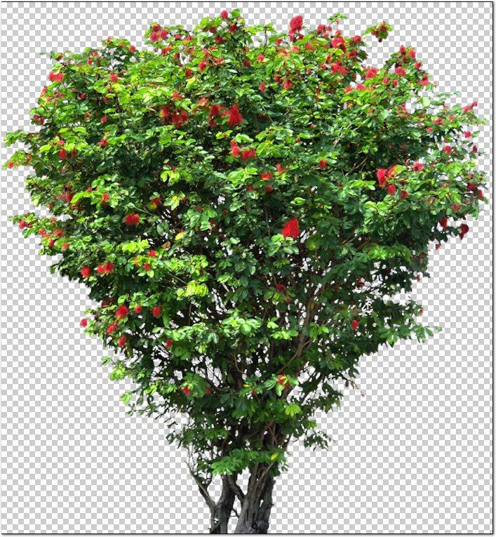 Recursos Chele Guada 67 Arbustos Y Plantas De Jardin En Png 77 Mb