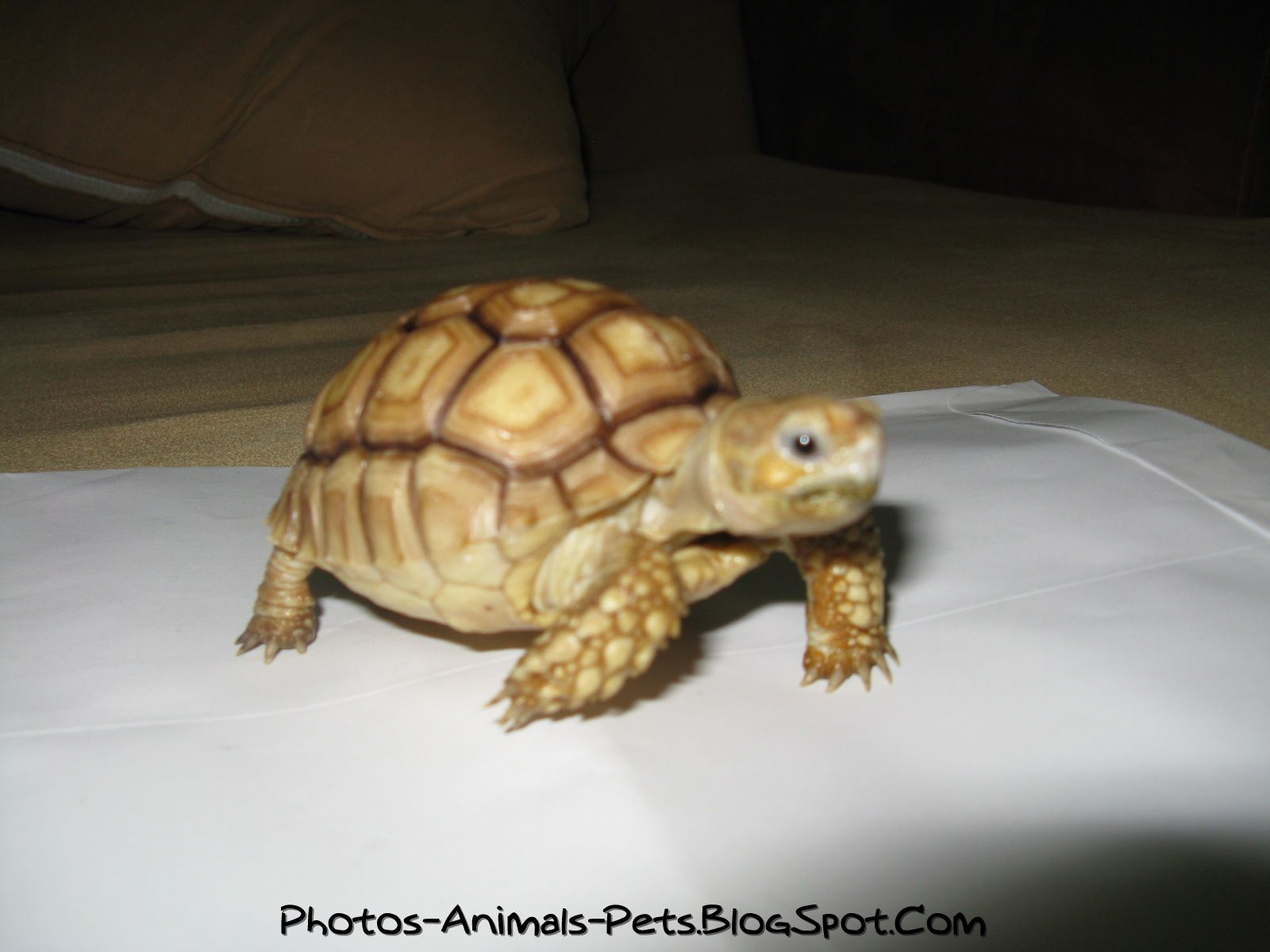 Cute Baby Turtles Pictures Photos Animals Pets Blogspot