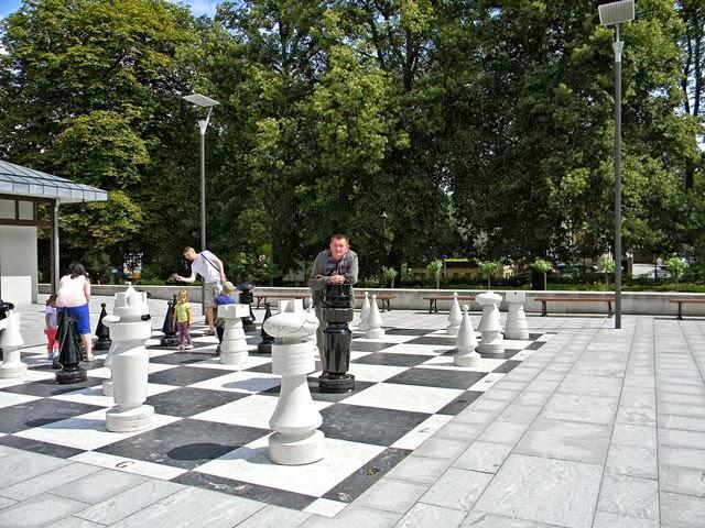 zięba, polanica, szachownica