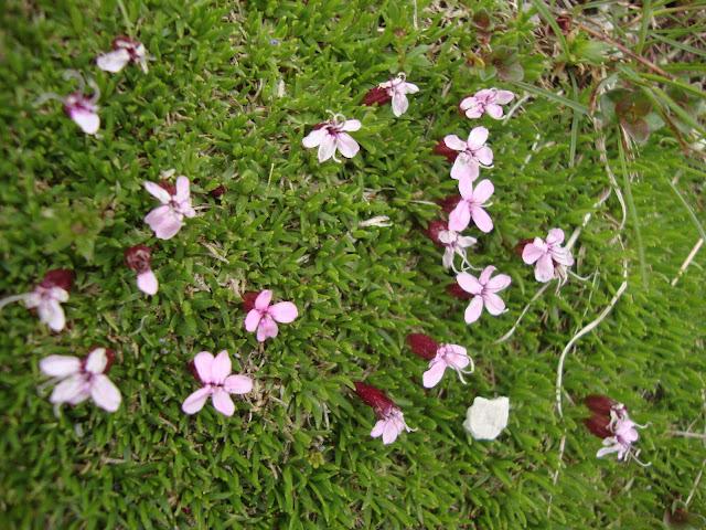 Un piccolo giardino in citt fiori dalle dolomiti parte for Trasforma un semplice terreno in un colorato giardino