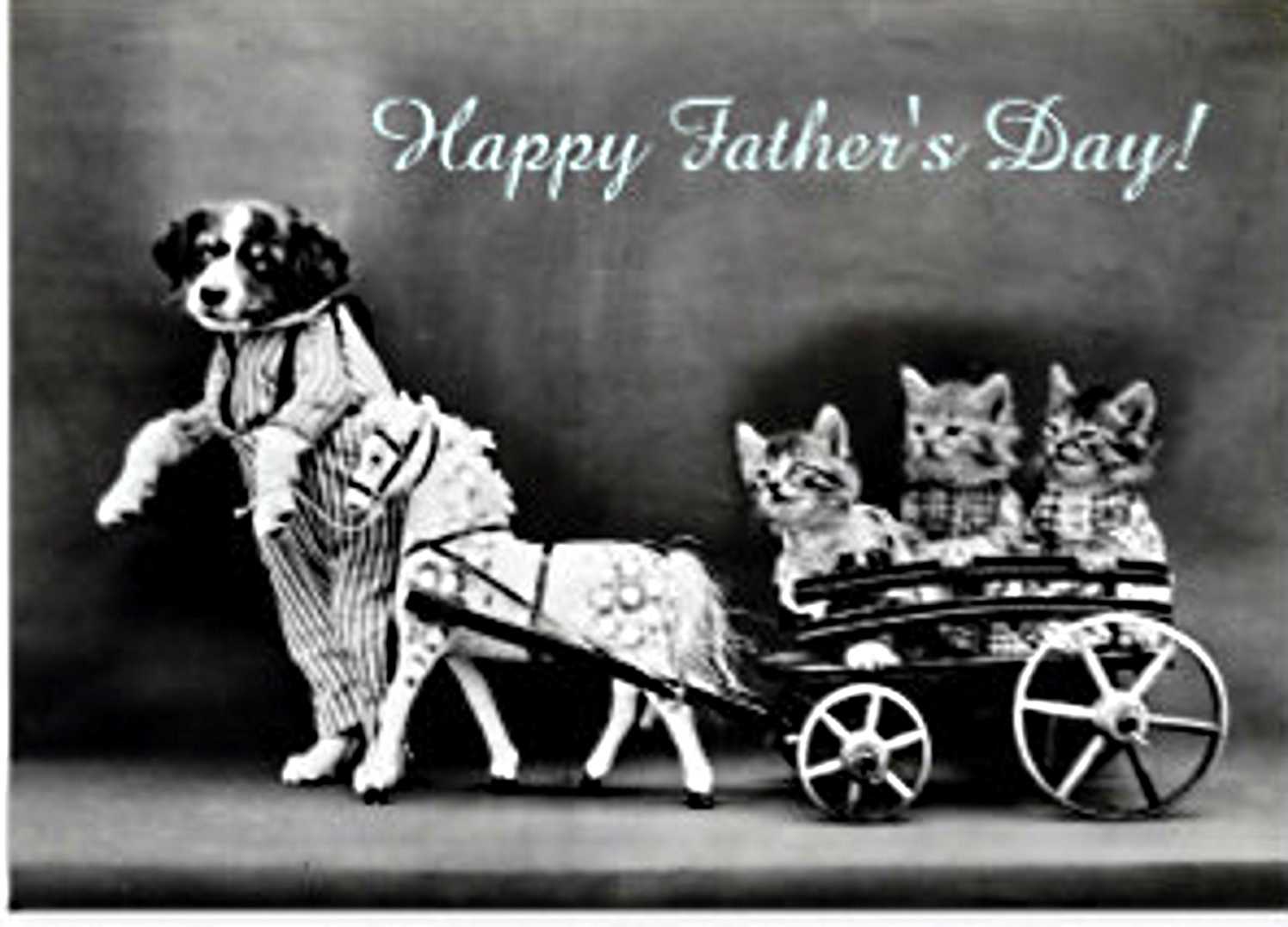 Katiez furry mewz special fathers day birthdays and daddy cat him went otrb last sunday with mommy cat by hims side daddy cat am celebrating fathers day in heaven with sciox Gallery