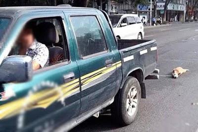 Ηλεία: Χειροπέδες στον 45χρονο που είχε δέσει και έσερνε το σκύλο με το αυτοκίνητό του