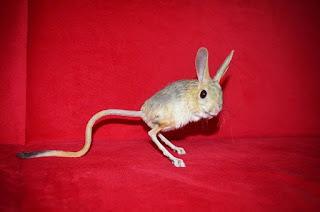 Jual Jerboa Pet Sale,  Harga Jerboa Pet Sale,  Toko Jerboa Pet Sale,  Diskon Jerboa Pet Sale,  Beli Jerboa Pet Sale,  Review Jerboa Pet Sale,  Promo Jerboa Pet Sale,  Spesifikasi Jerboa Pet Sale,  Jerboa Pet Sale Murah,  Jerboa Pet Sale Asli,  Jerboa Pet Sale Original,  Jerboa Pet Sale Jakarta,  Jenis Jerboa Pet Sale,  Budidaya Jerboa Pet Sale,  Peternak Jerboa Pet Sale,  Cara Merawat Jerboa Pet Sale,  Tips Merawat Jerboa Pet Sale,  Bagaimana cara merawat Jerboa Pet Sale,  Bagaimana mengobati Jerboa Pet Sale,  Ciri-Ciri Hamil Jerboa Pet Sale,  Kandang Jerboa Pet Sale,  Ternak Jerboa Pet Sale,  Makanan Jerboa Pet Sale,  guppy breeding Jerboa Pet Sale,  guppies for sale Jerboa Pet Sale,  guppy care Jerboa Pet Sale,  breeding guppiesJerboa Pet Sale,  male guppiesJerboa Pet Sale,  female guppiesJerboa Pet Sale,  guppy aquariumJerboa Pet Sale,  baby guppiesJerboa Pet Sale,  poecilia reticulataJerboa Pet Sale,  guppy tankJerboa Pet Sale,  guppy fryJerboa Pet Sale,  guppy giving birthJerboa Pet Sale,  how long do guppies liveJerboa Pet Sale,  guppysJerboa Pet Sale,  guppy guppyJerboa Pet Sale,  guppy foodJerboa Pet Sale,  guppy breeding tankJerboa Pet Sale,  fantail guppyJerboa Pet Sale,  guppy breedsJerboa Pet Sale,  guppy sJerboa Pet Sale,  wild guppiesJerboa Pet Sale,  guppy babiesJerboa Pet Sale,  guppy varietiesJerboa Pet Sale,  freshwater guppies Jerboa Pet Sale,  guppy female Jerboa Pet Sale,  tropical guppies Jerboa Pet Sale,  female guppies for saleJerboa Pet Sale,  guppy priceJerboa Pet Sale,  raising guppiesJerboa Pet Sale,  guppies for sale onlineJerboa Pet Sale,  guppy infoJerboa Pet Sale,  buy guppies onlineJerboa Pet Sale,  guppy saleJerboa Pet Sale,  buy guppiesJerboa Pet Sale,  guppy diseasesJerboa Pet Sale,  guppies onlineJerboa Pet Sale,  caring for guppiesJerboa Pet Sale,  best food for guppiesJerboa Pet Sale,  food for guppiesJerboa Pet Sale,  blue guppyJerboa Pet Sale,  guppy breeding setupJerboa Pet Sale,  guppy birthJerboa Pet Sale,  guppy speciesJerboa Pet Sale,  gestation period for guppiesJerboa Pet Sale,  guppys onlineJerboa Pet Sale,  guppy care sheetJerboa Pet Sale,  guppy blue  Jakarta,  keeping guppies  Bandung,  guppies for sale cheap  Medan,  the guppy  Bali,  guppy breeding cycle  Makassar,  show guppies  Jambi,  thai guppy  Pekanbaru,  male and female guppies  Palembang,  what to feed baby guppies  Sumatera,  yellow guppy  Langsa,  guppy names  Lhokseumawe,  guppy gestation period  Meulaboh,  feeding guppies  Sabang,  guppy genetics  Subulussalam,  guppy show  Denpasar,  turquoise guppy  Pangkalpinang,  guppy fry care  Cilegon,  guppy games  Serang,  guppy gestation  Tangerang Selatan,  guppy colors  Tangerang,  guppy tank setup  Bengkulu,  trinidadian guppies  Gorontalo,  guppies having babies  Kota Administrasi Jakarta Barat,  guppy strains  Kota Administrasi Jakarta Pusat,  what do guppies eat  Kota Administrasi Jakarta Selatan,  what to feed guppies  Kota Administrasi Jakarta Timur,  guppy life span  Kota Administrasi Jakarta Utara,  how to care for guppies  Sungai Penuh,  guppy male and female  Jambi,  what is a guppy  Bandung,  guppy natural habitat  Bekasi,  german guppy  Bogor,  guppy poecilia reticulata  Cimahi,  guppy images  Cirebon,  images of guppies  Depok,  fishguppy  Sukabumi,  guppy facts  Tasikmalaya,  how many babies do guppies have  Banjar,  how big do guppies get  Magelang,  how to take care of guppies  Pekalongan,  fan tailed guppies  Purwokerto,  guppy pregnant  Salatiga,  guppy life cycle  Semarang,  temperature for guppies  Surakarta,  what are guppies  Tegal,  guppies restaurant  Batu,  guppy definition  Blitar,  guppy meaning  Kediri,  guppy size  Madiun,  define guppy  Malang,  guppy wiki  Mojokerto,  how do guppies give birth  Pasuruan,  baby guppys  Probolinggo,  guppies bar  Surabaya,  how many fry do guppies have  Pontianak,  guppy behavior  Singkawang,  how many babies does a guppy have  Banjarbaru,  where do guppies come from  Banjarmasin,  how do guppies reproduce  Palangkaraya,  what does guppy mean  Balikpapan,  what is guppy  Bontang,  types of guppy  Samarinda,  guppy guppies  Tarakan,  guppy house hours  Batam,  guppys on the go  Tanjungpinang,  guppys restaurant  Bandar Lampung,  guppies definition  Kotabumi,  do guppies eat their babies  Liwa,  gestation guppy  Metro,  bubble guppies  Ternate,  guppy  Tidore Kepulauan,  Jerboa Pet Sale  Ambon,  Jerboa Pet Sale  Tual,  Jerboa Pet Sale  Bima,  Jerboa Pet Sale  Mataram,  Jerboa Pet Sale  Kupang,  Jerboa Pet Sale  Sorong,  Jerboa Pet Sale  Jayapura,  Jerboa Pet Sale  Dumai,  Jerboa Pet Sale  Pekanbaru,  Jerboa Pet Sale  Makassar,  Jerboa Pet Sale  Palopo,  Jerboa Pet Sale  Parepare,  Jerboa Pet Sale  Palu,  Jerboa Pet Sale  Bau-Bau,  Jerboa Pet Sale  Kendari,  Jerboa Pet Sale  Bitung,  Jerboa Pet Sale  Kotamobagu,  Jerboa Pet Sale  Manado,  Jerboa Pet Sale  Tomohon,  Jerboa Pet Sale  Bukittinggi,  Jerboa Pet Sale  Padang,  Jerboa Pet Sale  Padangpanjang,  Jerboa Pet Sale  Pariaman,  Jerboa Pet Sale  Payakumbuh,  Jerboa Pet Sale  Sawahlunto,  Jerboa Pet Sale  Solok,  Jerboa Pet Sale  Lubuklinggau,  Jerboa Pet Sale  Pagaralam,  Jerboa Pet Sale  Palembang,  Jerboa Pet Sale  Prabumulih,  Jerboa Pet Sale  Binjai,  Jerboa Pet Sale  Medan,  Jerboa Pet Sale  Padang Sidempuan,  Jerboa Pet Sale  Pematangsiantar,  Jerboa Pet Sale  Sibolga,  Jerboa Pet Sale  Tanjungbalai,  Jerboa Pet Sale  Tebingtinggi,  Jerboa Pet Sale  Yogyakarta,