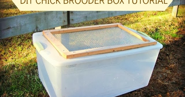 Easy Diy Chick Brooder Box Tutorial Fresh Eggs Daily 174