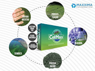 Khasiat Cellmaxx bagi kesehatan
