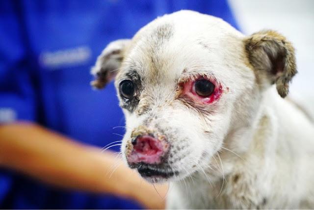 Ángel, el perrito sin nariz despreciado durante meses