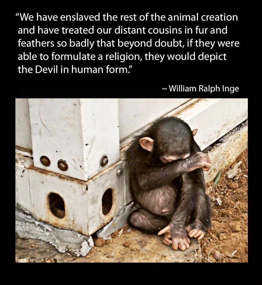 Animal humans