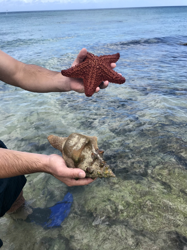 cozumel, cozumel mexico, north carolina blogger, travel blogger, cozumel travel guide, what to do in mexico, where to stay in cozumel