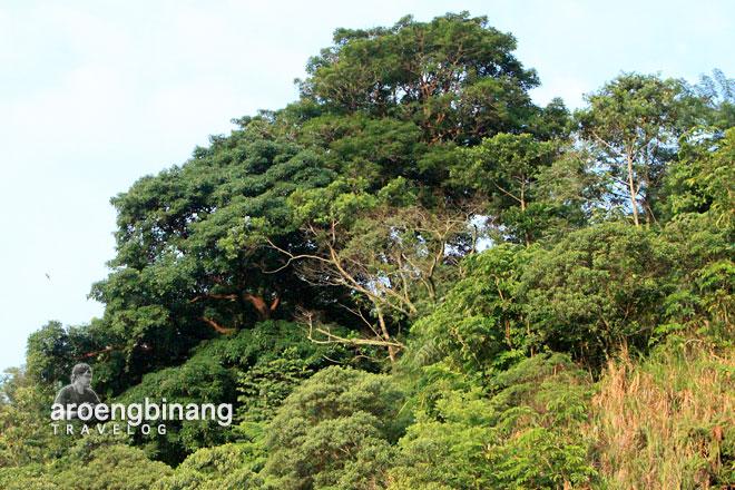 pohon rimbun bukit kasih minahasa sulawesi utara