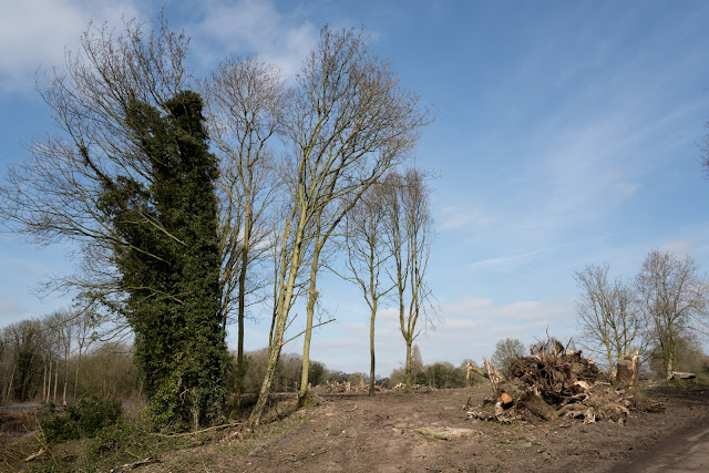 Sudbrroke wood clearance