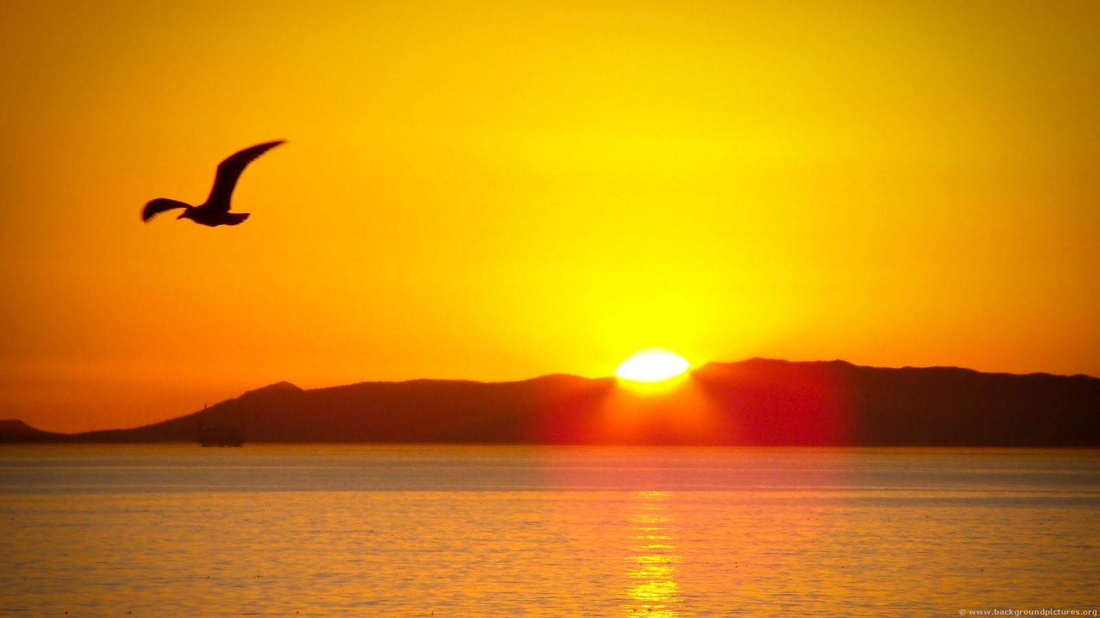Top   Wallpaper Horse Sunrise - sunrise%2Bwallpapers%2BHD%2B2  Perfect Image Reference_295434.jpg
