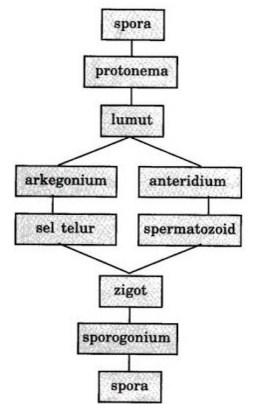 Pergiliran keturunan lumut