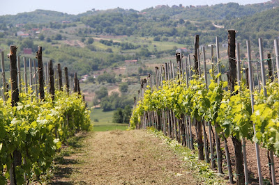 Donnachiara wines of Avellino