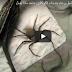 وضع عنكبوت ضخم داخل وعاء به مادة الكوكايين شاهد ماذا حصل