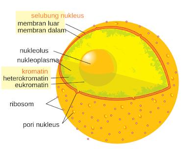 Contoh 2, Gambar Struktur dan Bagian Inti Sel