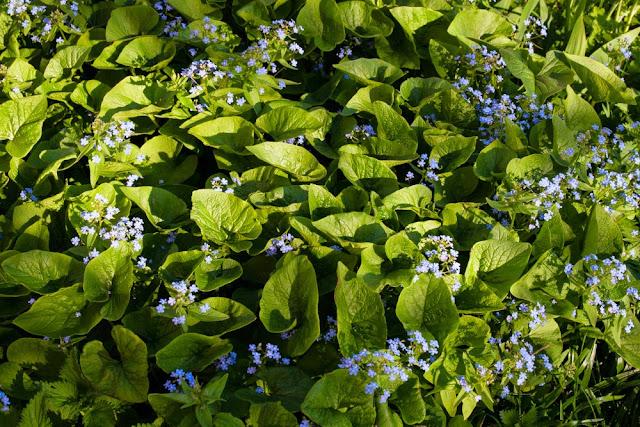 Весенние цветы в саду