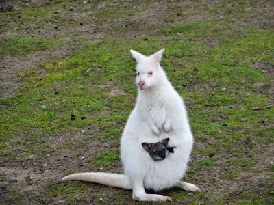 Imagenes muy divertidas de animales