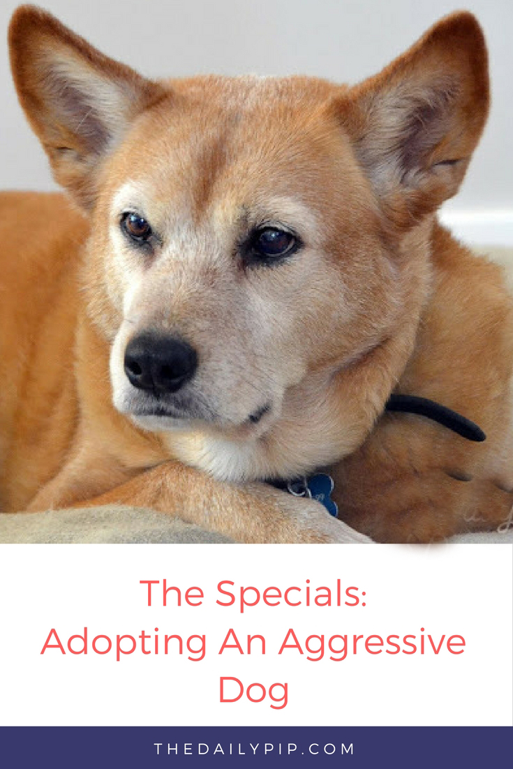 Adopting and Training an Aggressive Dog