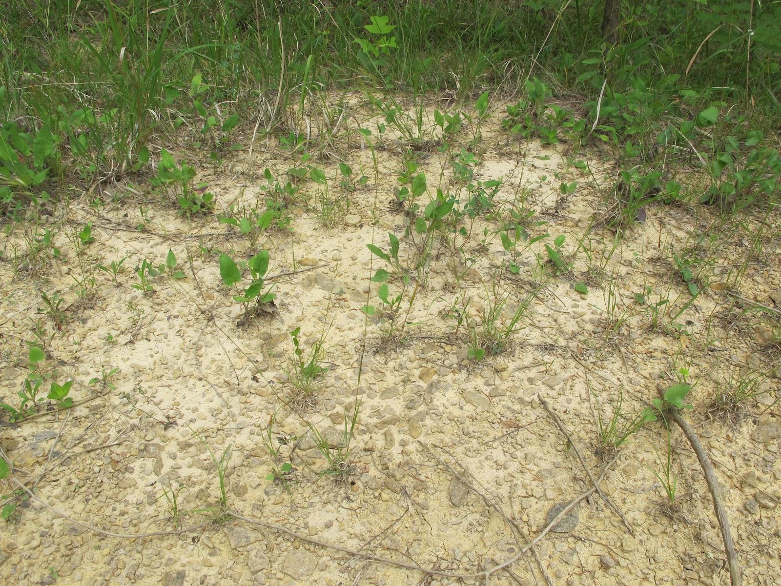 Blue Jay Barrens Bare Ground