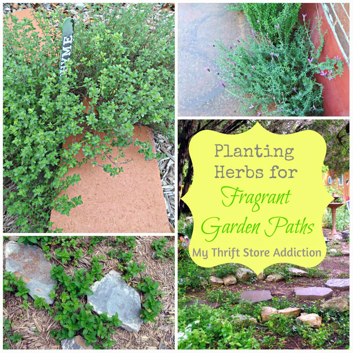 Plant herbs for fragrant paths and landscaping