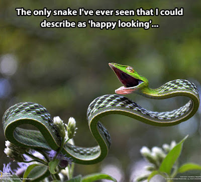 Snakes Quotes