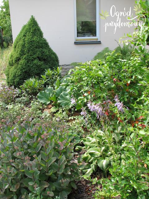 prace ogrodowe, ogród przydomowy