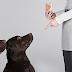 Mira como entrenar a un perro trucos bien explicado