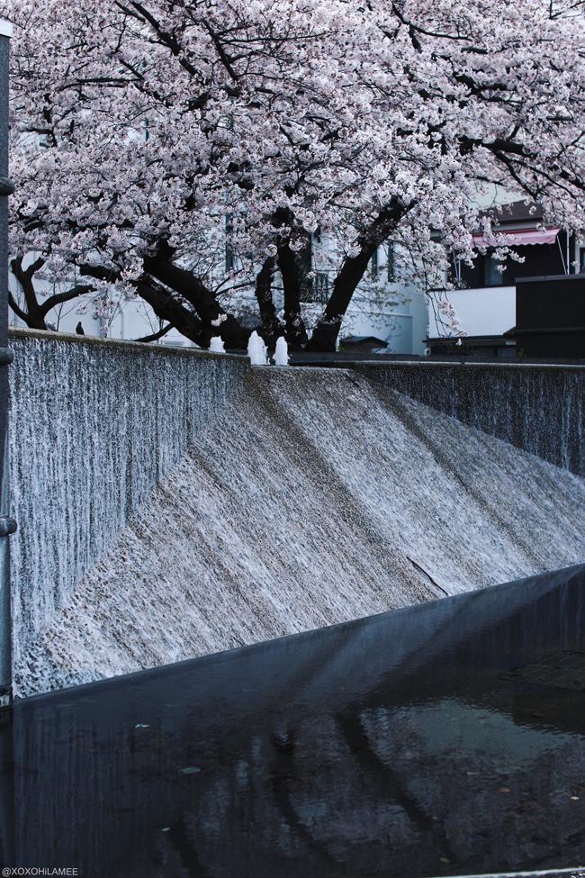 日本キリスト教会 横浜海岸教会、ソメイヨシノ、桜、噴水、開港記念広場