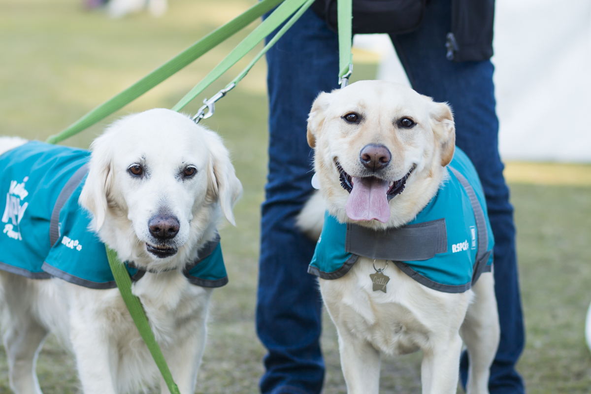 Frankston Pet\'s Day Out 2017 - October 8 | Australian Dog Lover