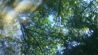 עצים שמים והשתקפויות - טיירגארטן