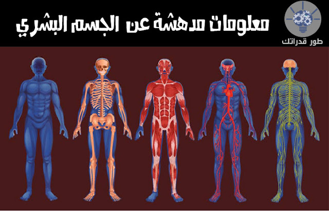 معلومات مدهشة عن الجسم البشري