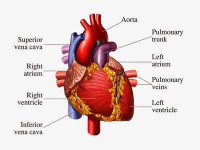 ciri-ciri gejala awal penyakit jantung