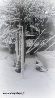 luminen lavakauluspuutarha